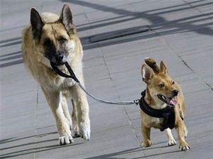 O cachorro do cachorro